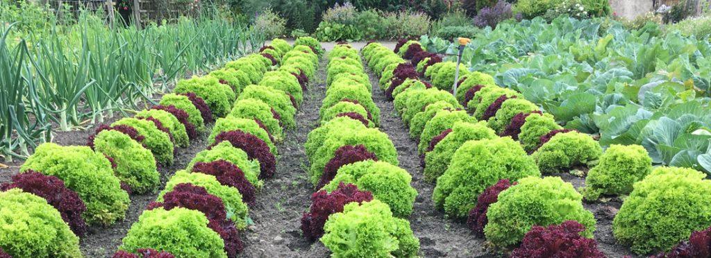 Walled Garden 07
