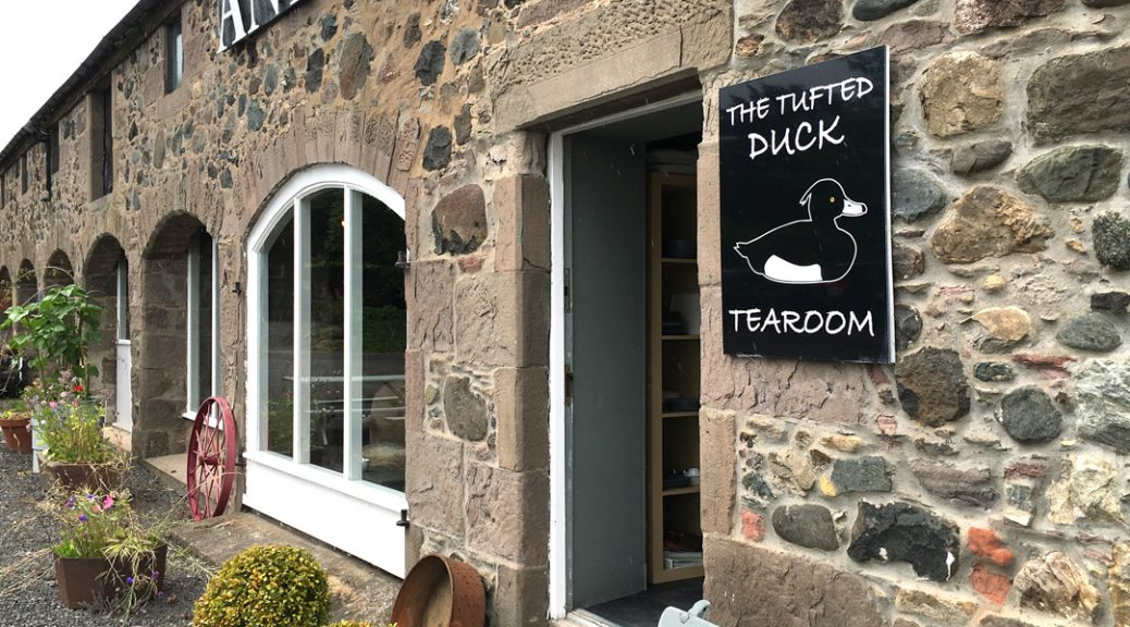 Tufted Duck external view