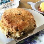 a Ladybird Tearoom scone
