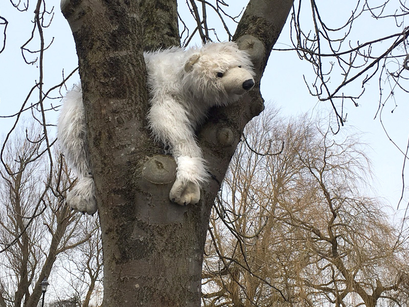 Polar bear stuck up a tree in Linlithgow